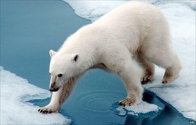 Почему медведь впадает в спячку