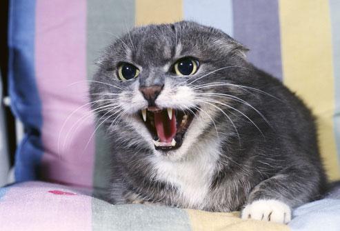 Сколько усов у кошки и зачем они нужны